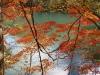 大尻沼紅葉