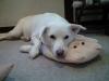 我が家の愛犬ペコ